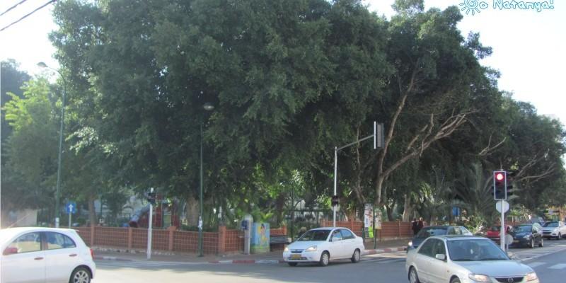 Парк Иерушалайм в Нетании на перекрестке Смилянски и Сдерот Иерушалайм