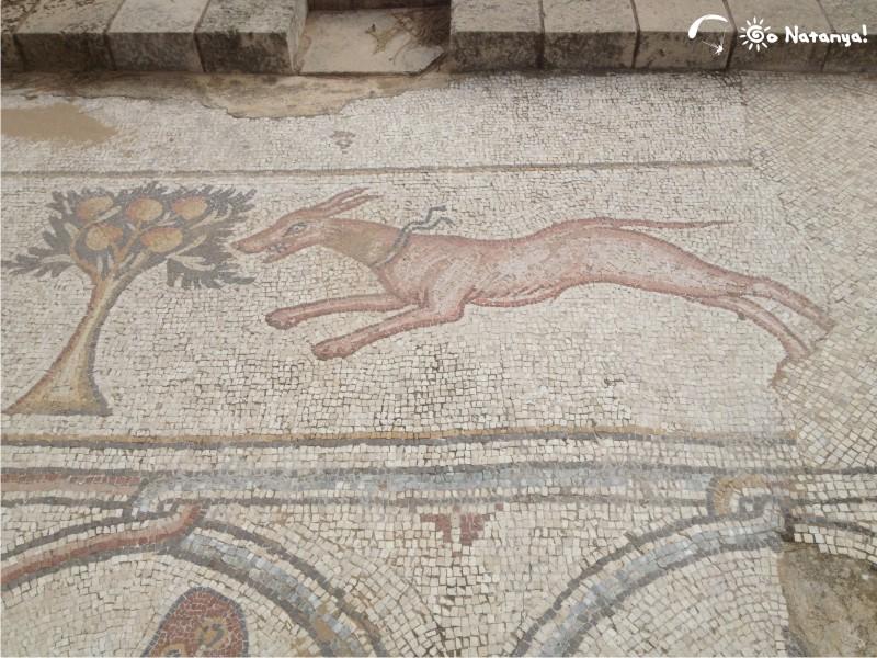 Древняя и средневековая Кейсария: часть первая | Нетания - лучшее место для жизни в Израиле