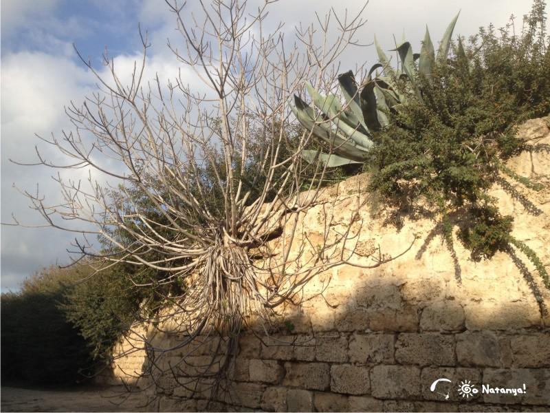 Древняя и средневековая Кейсария: часть вторая | Нетания - лучшее место для жизни в Израиле