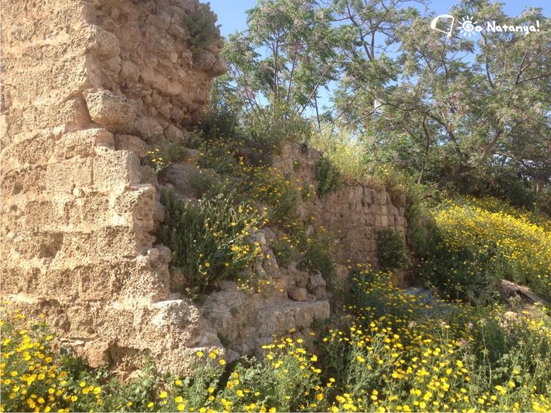 Вид на восточную стену замка Роджера Ломбардского в Нетании