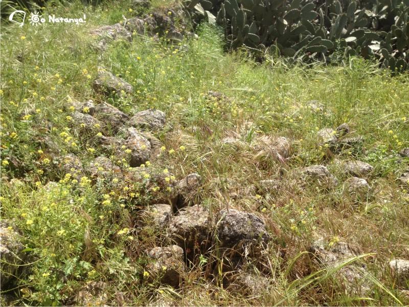 Какун (Qaqun) средневековый замок в Израиле