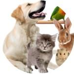 Товары для животных, ветеринарные магазины, аптеки, клиники в Нетании