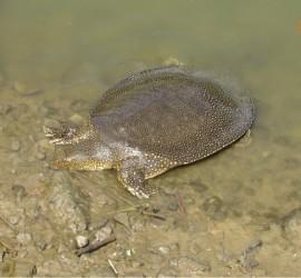 """Черепаховый заповедник на ручье """"Александер"""""""